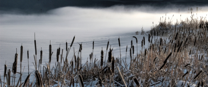 Cattails in Winter (small)