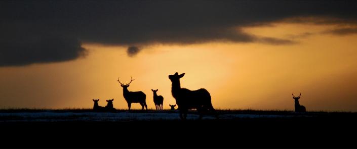 Elk Sunset (small)
