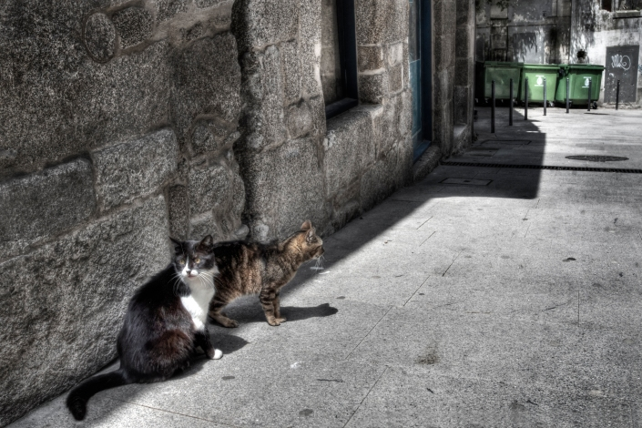 Strays (Blend) (small)